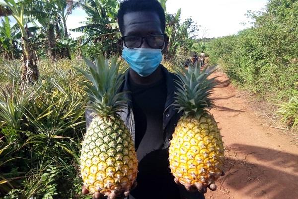Ugandan man carrying two pineapples